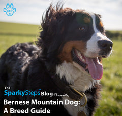 Bernese Mountain Dog: A Breed Guide