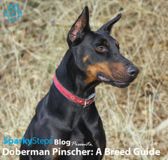 Doberman Pinscher: A Breed Guide