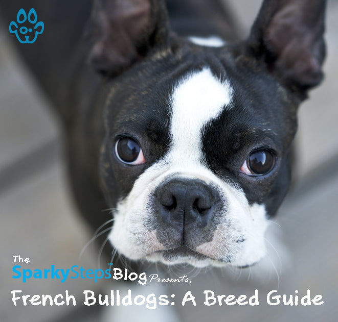 French Bulldogs: A Breed Guide