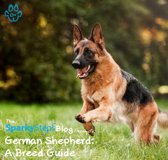 German Shepherd: A Breed Guide