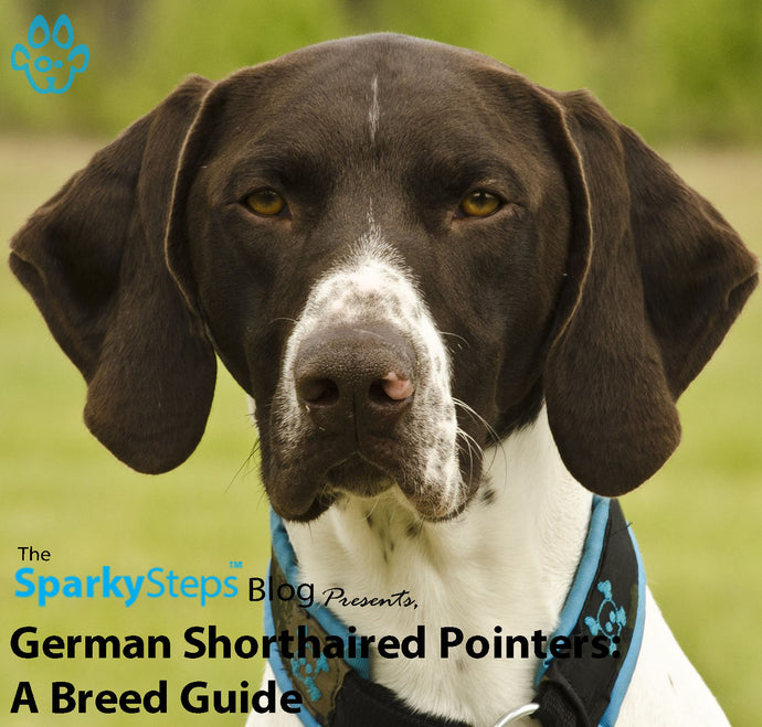 German Shorthaired Pointers: A Breed Guide
