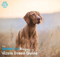 Getting to Know the Vizsla: A Breed Guide