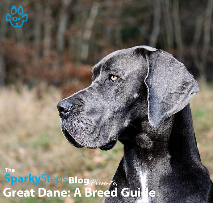 Great Danes: A Breed Guide