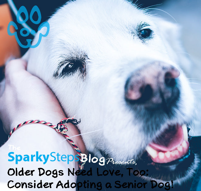 Older Dogs Need Love, Too: Consider Adopting a Senior Dog!