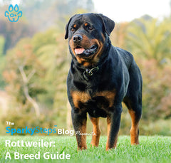 Rottweiler: A Breed Guide