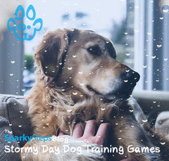 Stormy Day Dog Training Games