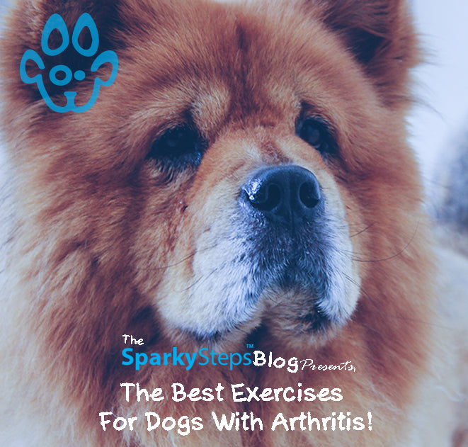 The Best Exercises For Dogs With Arthritis