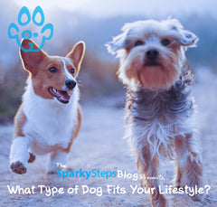 What Type of Dog Fits Your Lifestyle?