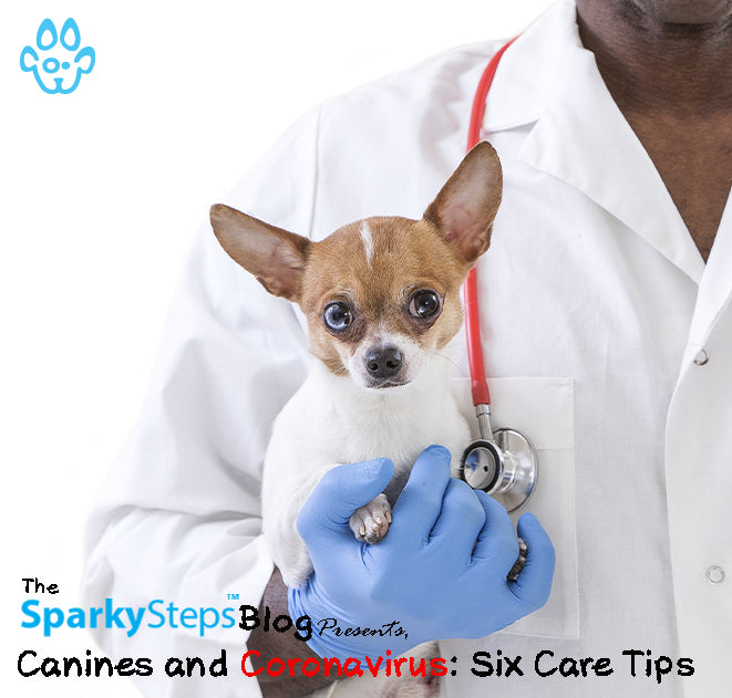Canines and Coronavirus: Six Care Tips
