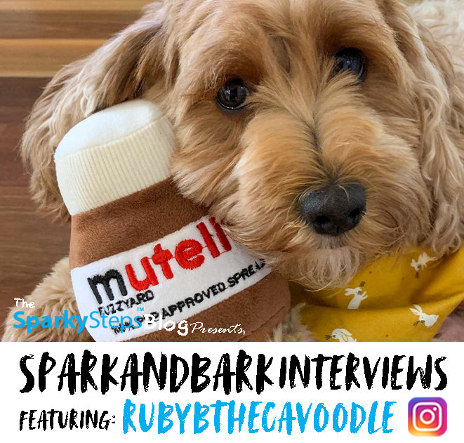 Interview With RubyBTheCavoodle