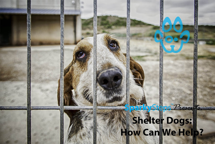 Shelter Dogs: How Can We Help?