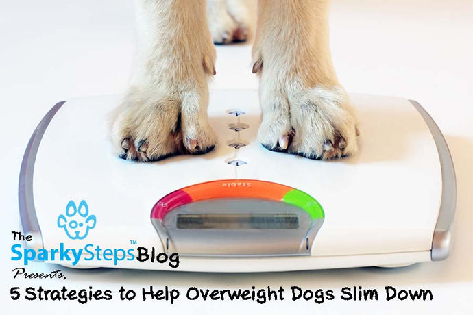 5 Strategies to Help Overweight Dogs Slim Down