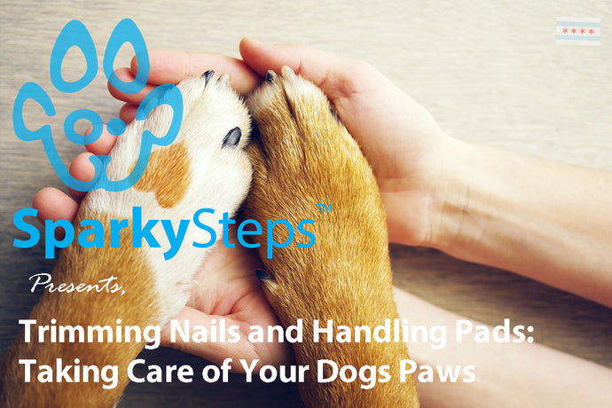 Trimming Nails and Handling Cracked Pads: Taking Care of Your Dogs Paws