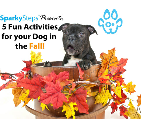 Sparky Steps - 5 Fun Activities for Your Dog in the Fall!