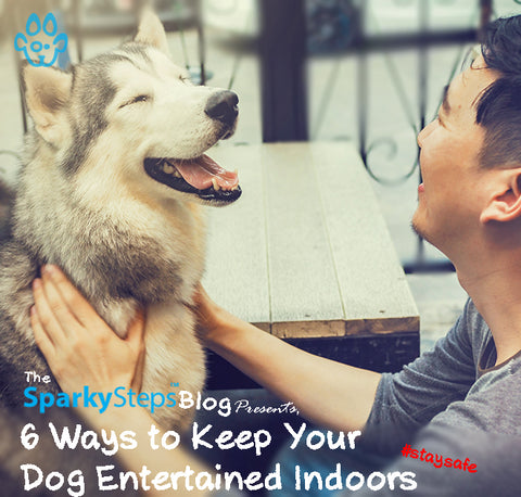 6 Ways To Keep Your Dog Entertained Indoors - Sparky Steps Chicago Pet Sitters - Article