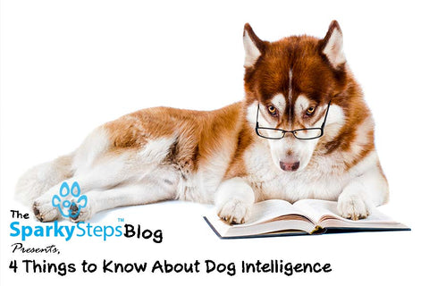 Sparky Steps - 4 Things to Know About Dog Intelligence