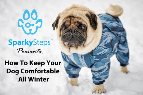 Sparky Steps - How to Keep Your Dog Comfortable All Winter