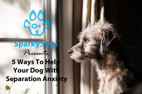 Sparky Steps - 5 Ways to Help Your Dog With Separation Anxiety