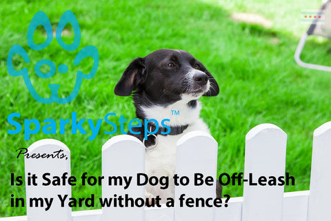 Sparky Steps - Is it Safe for my Dog to Be Off-Leash in my Yard without a fence?