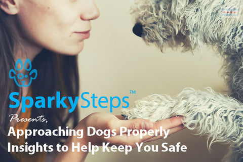 Sparky Steps - Approaching Dogs Properly: Insights to Help Keep You Safe