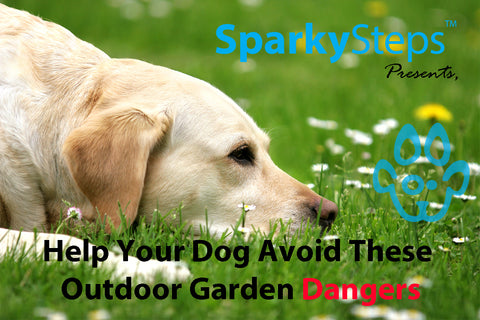 Sparky Steps - Help Your Dog Avoid These Outdoor Garden Dangers