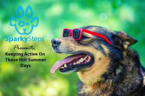 Sparky Steps - Too Hot For a Walk? How to Keep Your Dog Active on Blazing Hot Summer Days