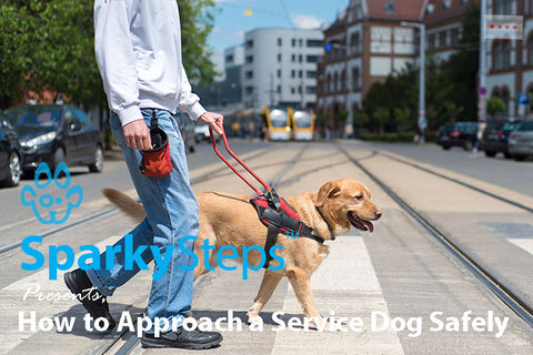 Sparky Steps - How to Approach a Service Dog Safely