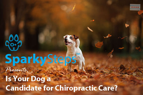 Sparky Steps - Is Your Dog a Candidate for Chiropractic Care?