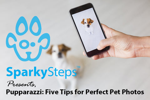 Sparky Steps - Pupparazzi: Five Tips for Perfect Pet Photos