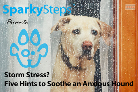 Sparky Steps - Storm Stress? Five Hints to Soothe an Anxious Hound