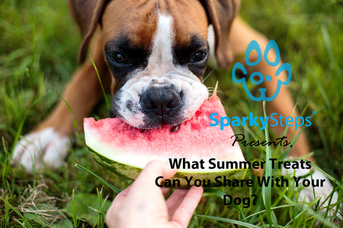 Sparky Steps - What Summer Treats Can You Share with Your Dog?