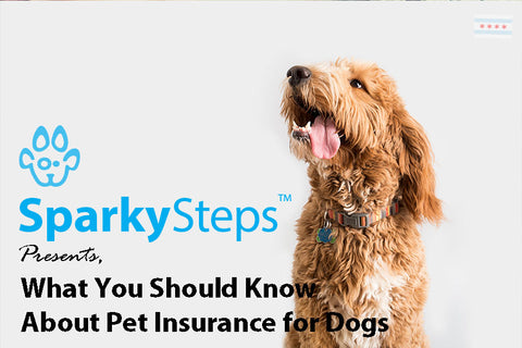 Sparky Steps - What You Should Know About Pet Insurance for Dogs