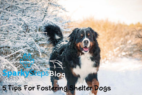 Sparky Steps - 5 Tips for Anyone Interested in Fostering Dogs