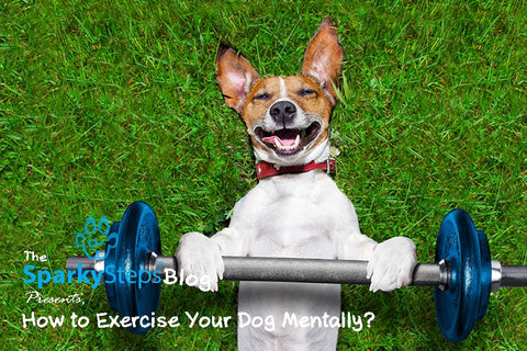Sparky Steps - How to Exercise Your Dog Mentally, Not Just Physically