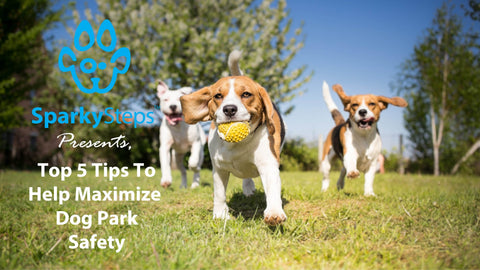 Sparky Steps - Top Five Tips to Help Maximize Dog Park Safety