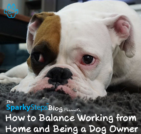 Article - How to Balance Working from Home and Being a Dog Owner - Sparky Steps Chicago Pet Sitters