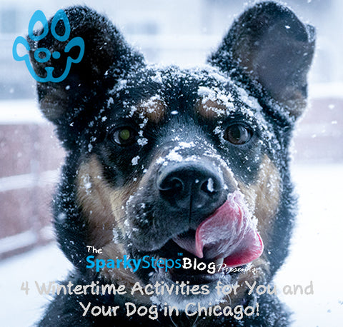 Sparky Steps - 4 Wintertime Activities for You and Your Dog in Chicago