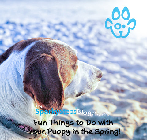 Sparky Steps - 5 Fun things to do with your pup in the Spring