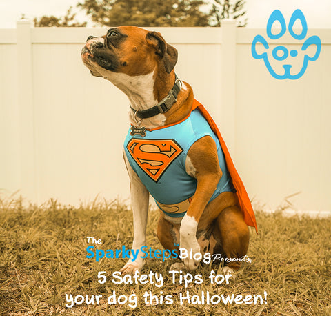 Sparky Steps - 5 Safety Tips for your dog this Halloween