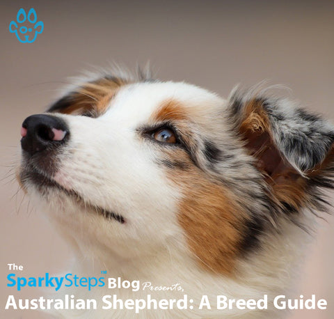 Article - Sparky Steps Chicago Pet Sitters - Australian Shepherd