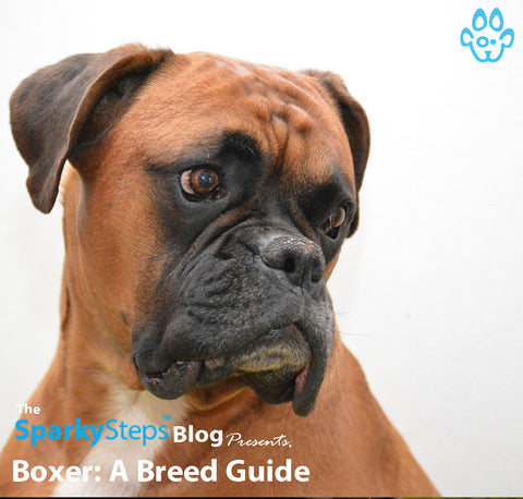 Article - Sparky Steps Chicago Pet Sitters - Boxer A Breed Guide