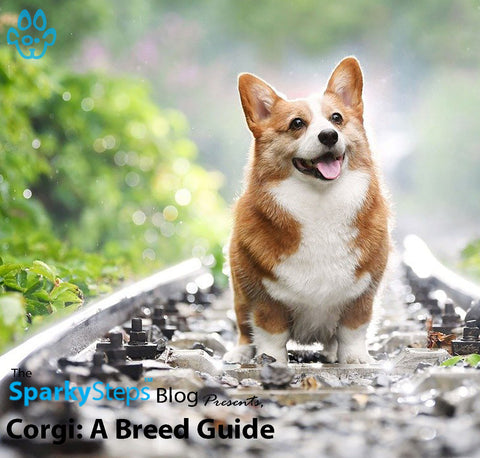 Article - Sparky Steps Chicago Pet Sitters - Corgi - A Breed Guide