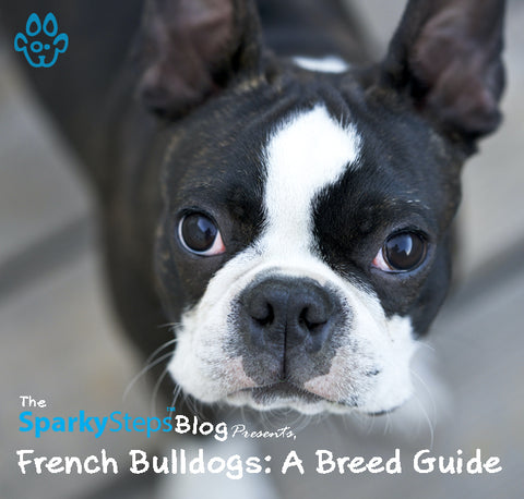 Article - Sparky Steps Chicago Pet Sitters - French Bulldog