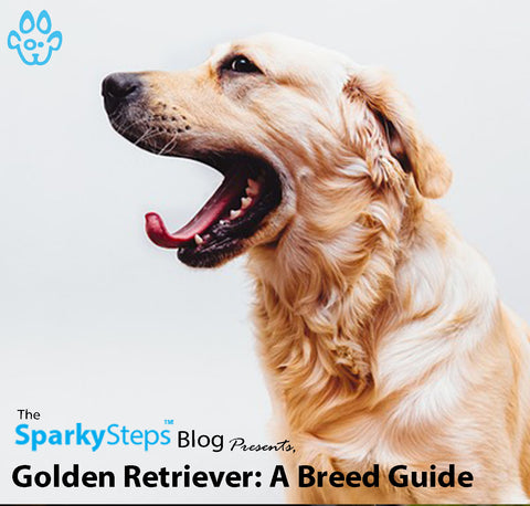 Article - Sparky Steps Chicago Pet Sitters - Golden Retriever A Breed Guide
