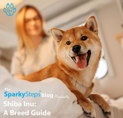 Article - Sparky Steps Chicago Pet Sitters - Shiba Inu - A Breed Guide