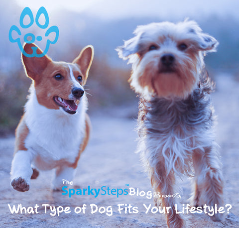 Sparky Steps - What Type of Dog Fits Your Lifestyle