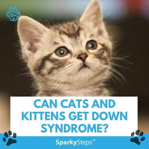 Can cats and kittens get down syndrome?