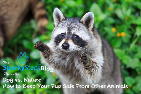 Sparky Steps - How to Keep Your Pup Safe From Other Animals