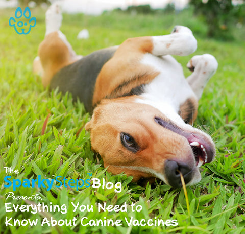 Everything You Need to Know About Canine Vaccines - Sparky Steps Chicago Pet Sitters - Article
