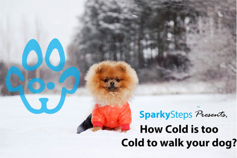 Sparky Steps - How Cold is too Cold to Walk your Dog